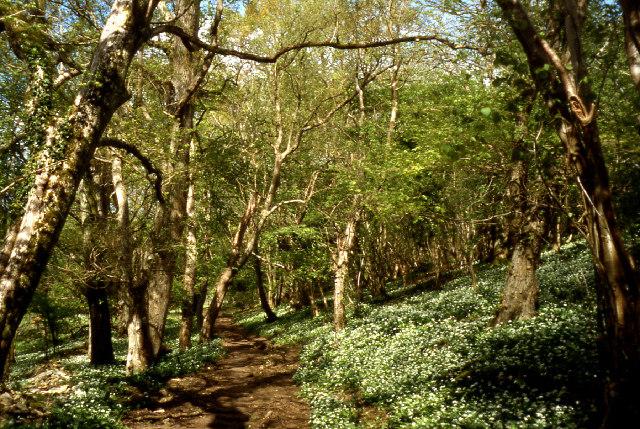 Tilley's Wood