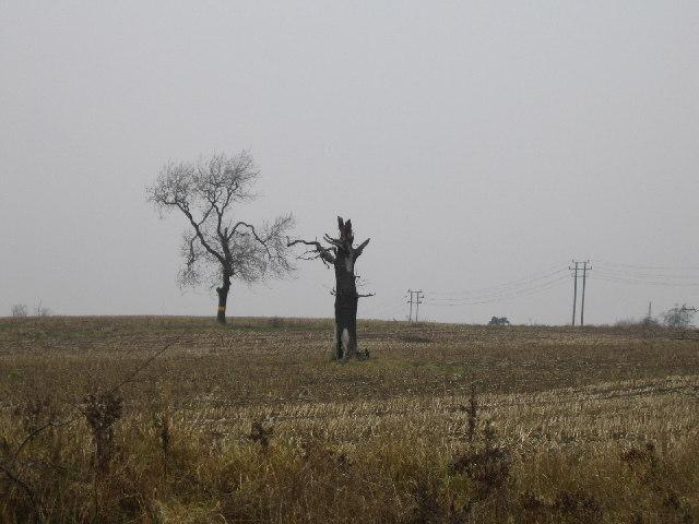 Farmland near Bedworth