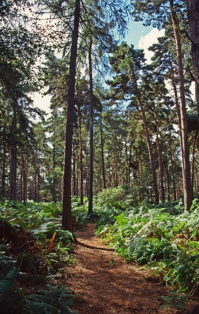 Southill Park Woods, Bedfordshire