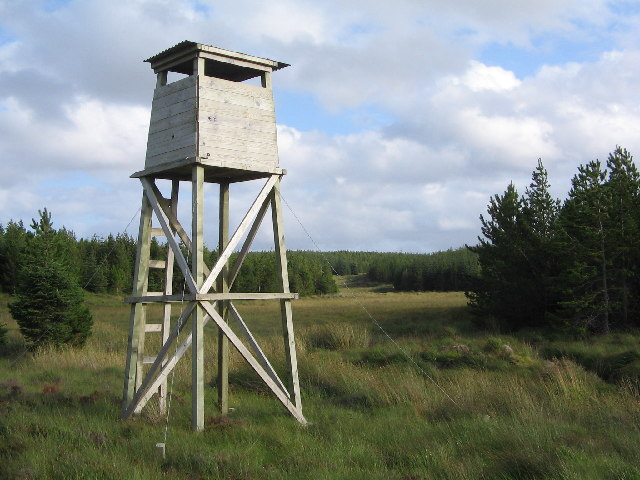 Observation Tower, Strathy Forest