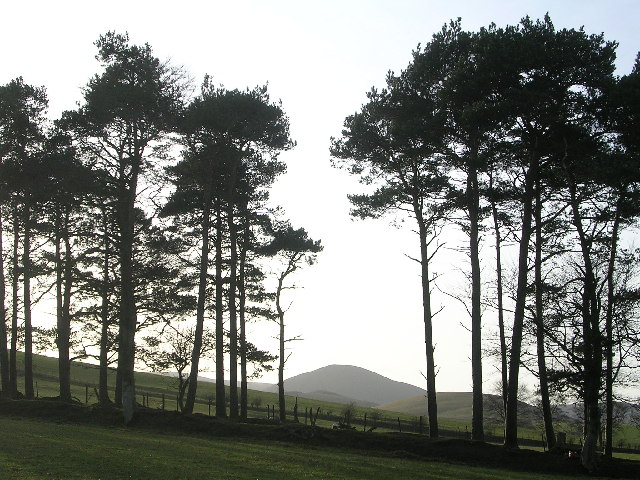 Stand of Pines framing Cardon Hill