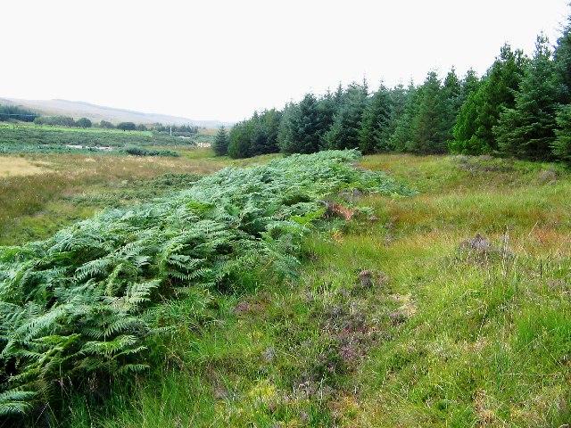 Forest margin at River Strathy