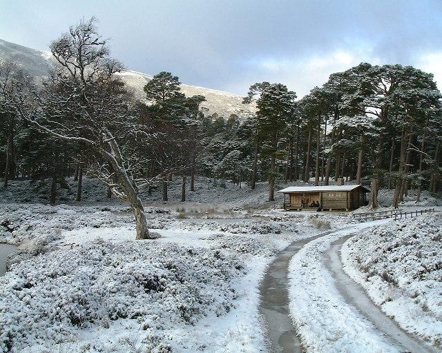The Royal Honka Hut