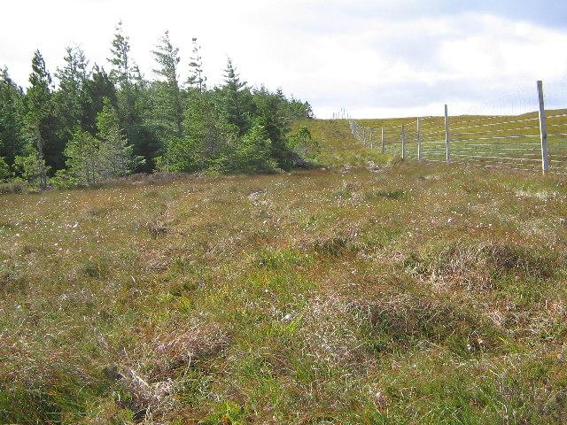 Deer Fence, Strathy Forest