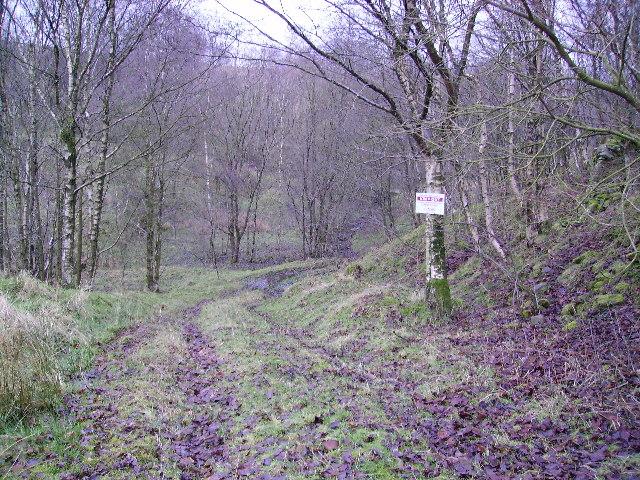 Woods Near Caton Moor
