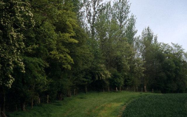 Whichford Wood