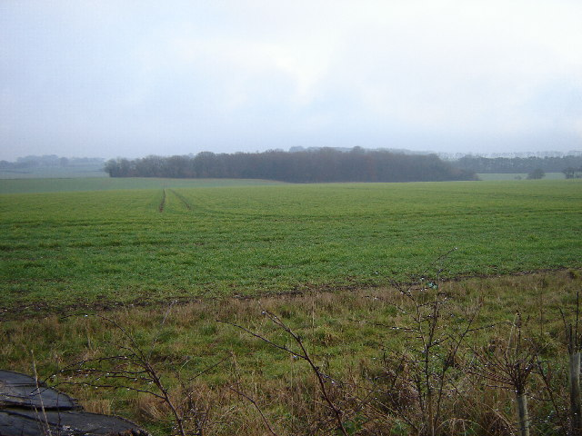 Lee Wood near Crondall