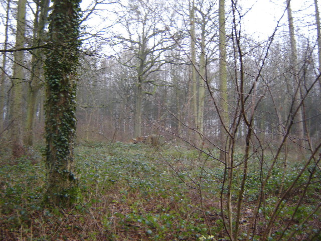 Woodland near Froyle