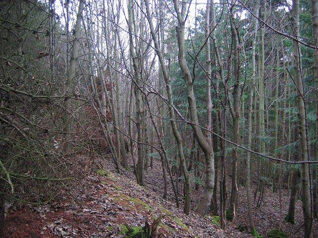 Eldbotle Wood.
