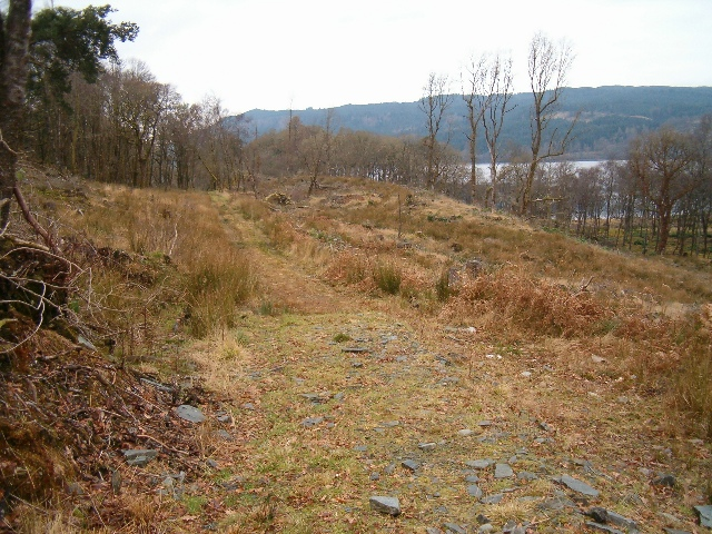 Felled forestry at Loch Awe