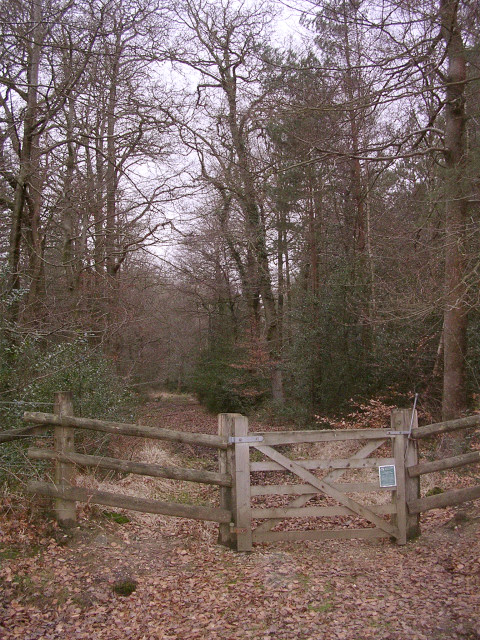 An entrance to the east side of the Brockishill Inclosure, New Forest