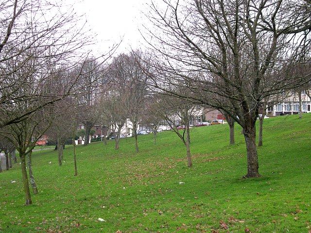 Whitleigh Green