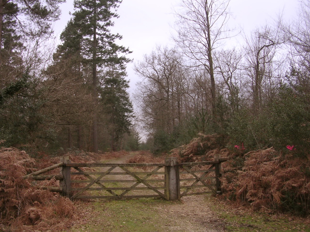 Eastern entrance to the Furzy Lawn Inclosure, New Forest