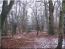 TQ4299 : Woodland near Wake Road by Andrew Dann