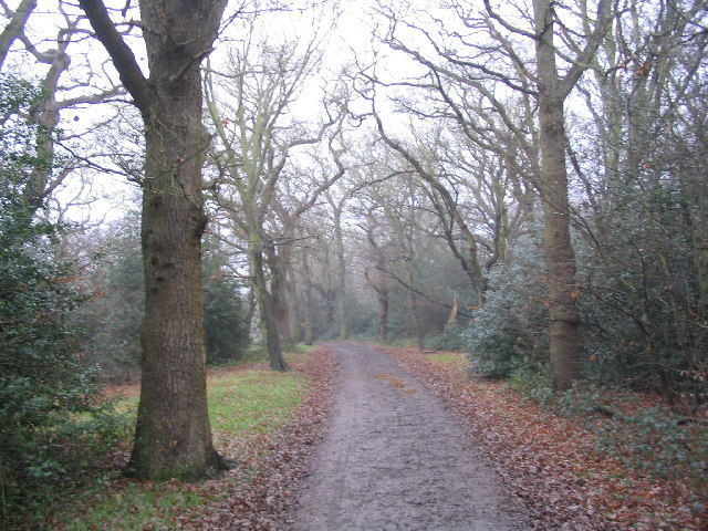 Woodland North of Chingford Plain