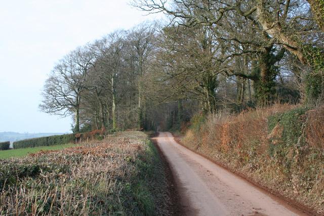 Cullompton: Hillersdon Wood