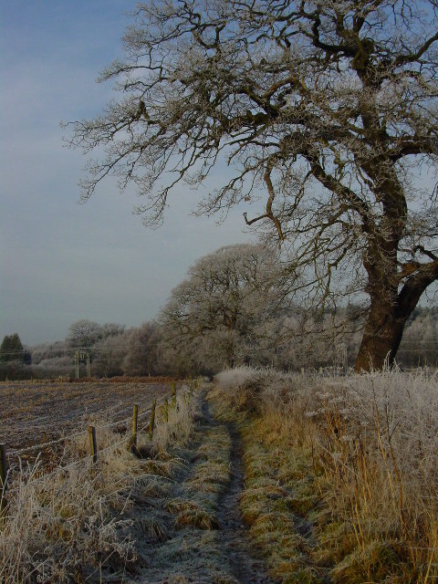 Winter morning on the path which runs NW to Heath Farm