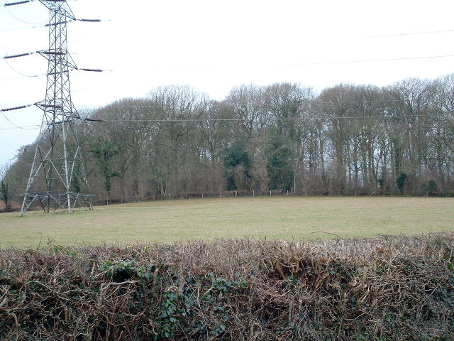 Rough Hill Wood