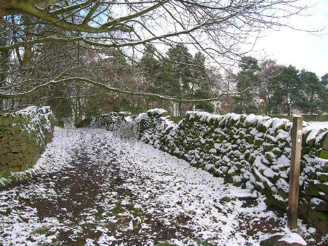 Walled footpath into Park Plantation, Alderwasley