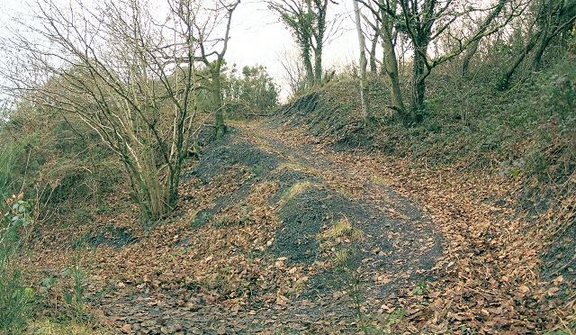 Woodland path in Parc Ynys Dawela