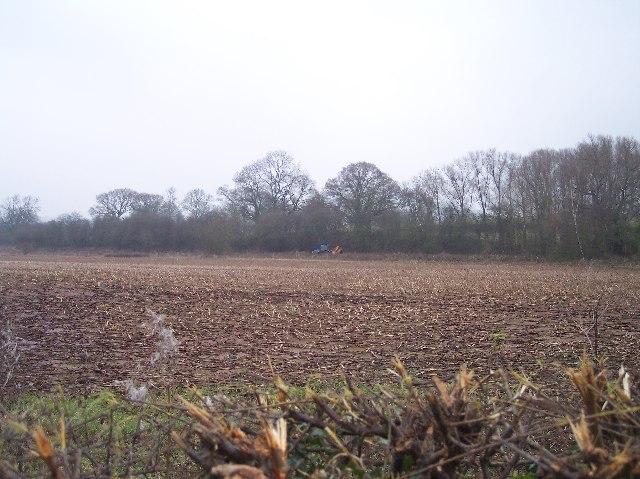 Hedge Trimming near Bridge End