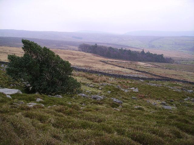 Tarnsyke Wood