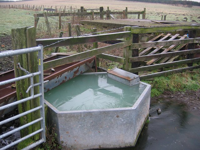 Frozen trough, Doddington.
