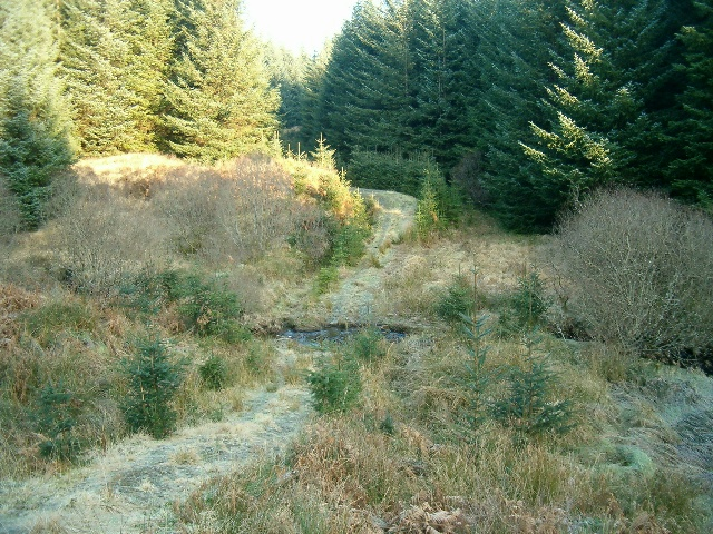Forestry track and burn, Inverliever Forest