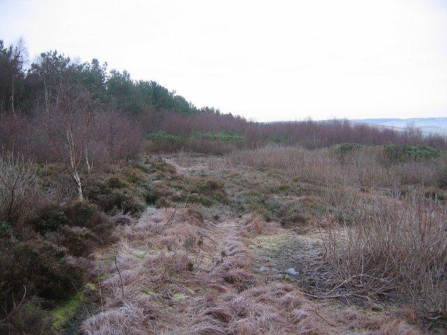Doddington North Moor.