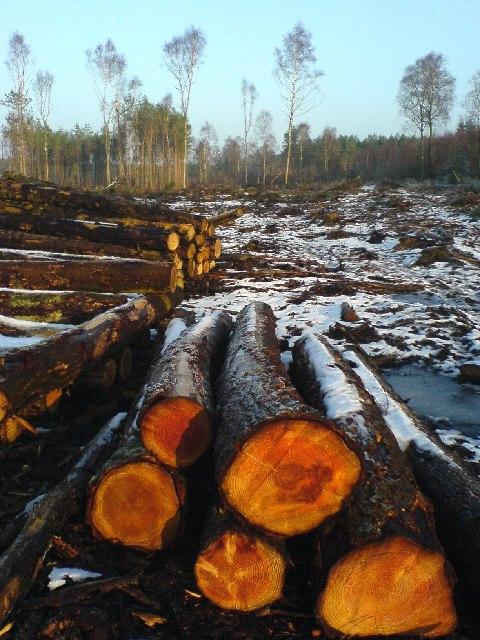 Logging Innerpeffray Wood