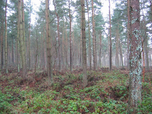 Fenton Wood.