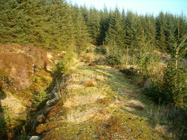Forestry track in Inverliever Forest