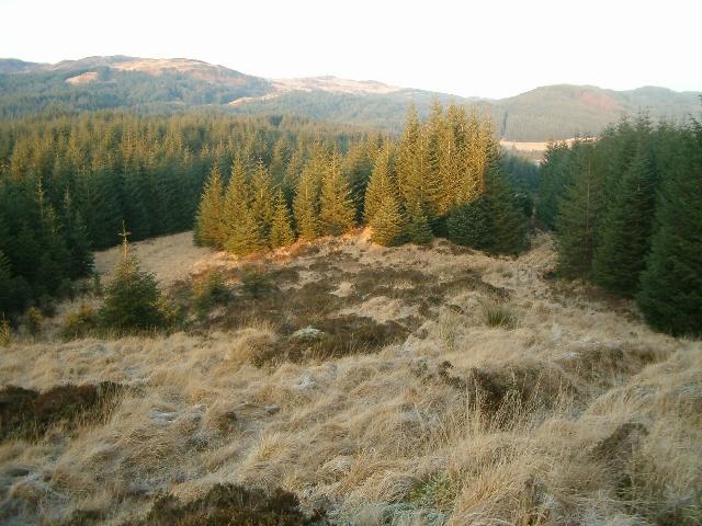 Inverliever Forest