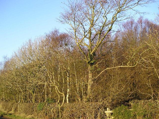 Benslie Wood
