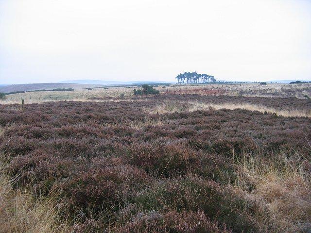 Doddington Moor
