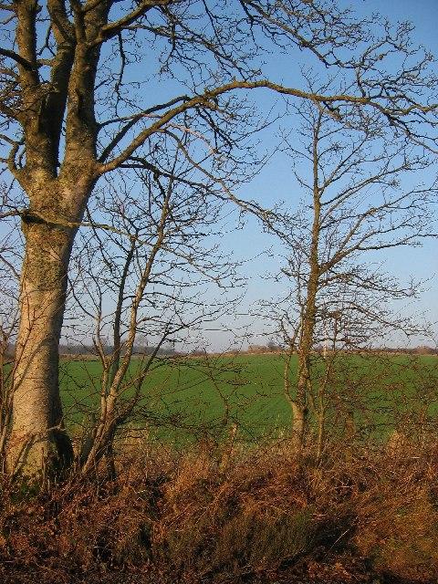 Fields at Trinity Gask