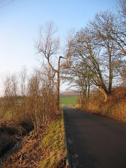 Damaged tree, Lowbank