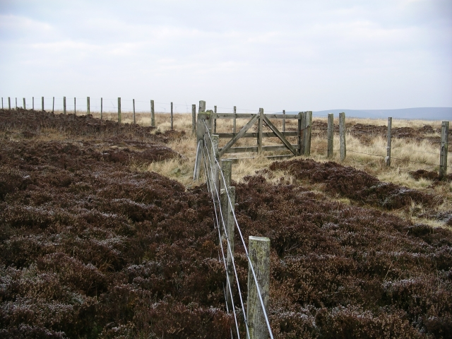 Gate and fences, Bothwell Hill.