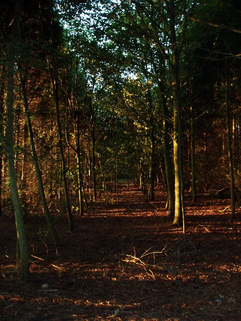Woodland near to East Hendred