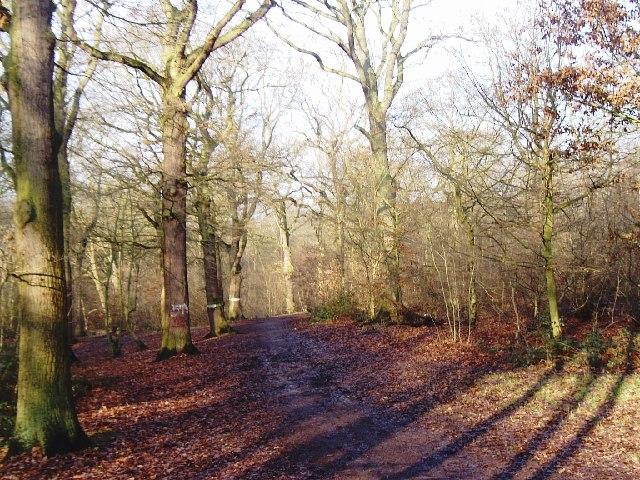 Part of Belfairs Wood, Leigh-on-Sea