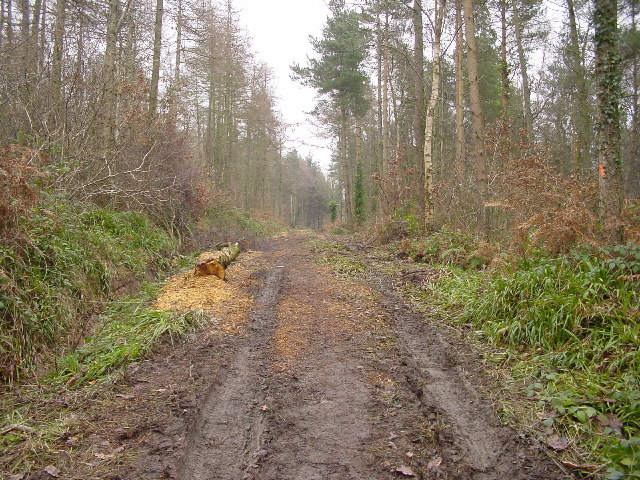 Dismantled Tramway Flimby Great Wood