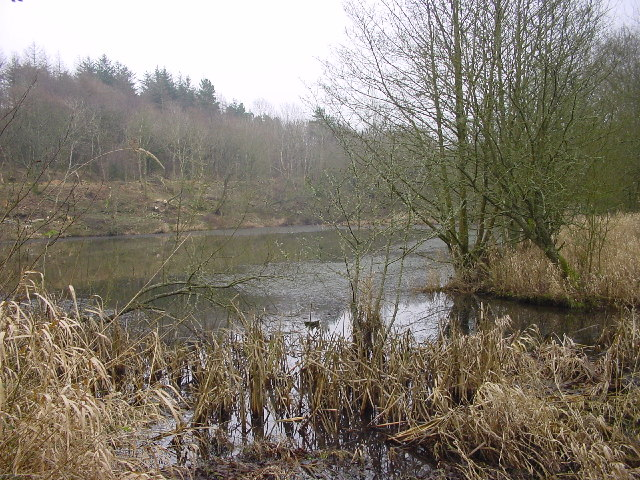 Old Reservoir, Flimby Great Wood