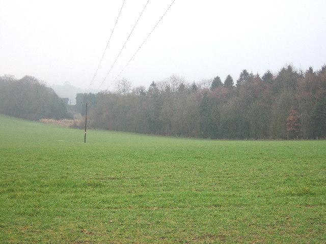 Field Plantation