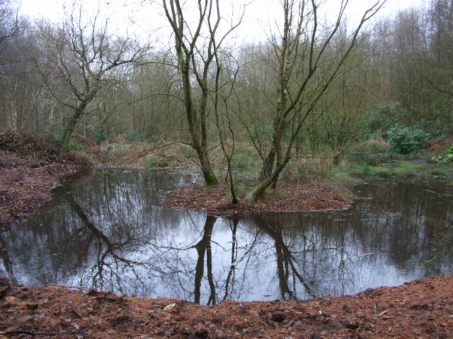 A pond in Penn Wood