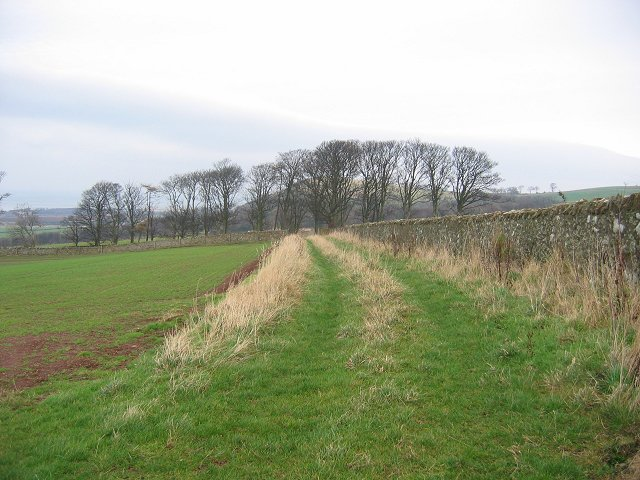 Field margin, Spott.
