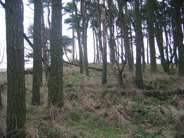Brunt Hill