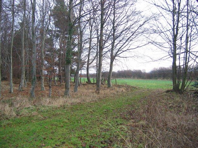Woodland, Hedderwick Hill.