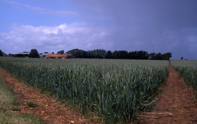 Fields above Empingham