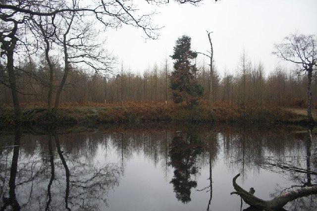 Bentley Park Wood Lake