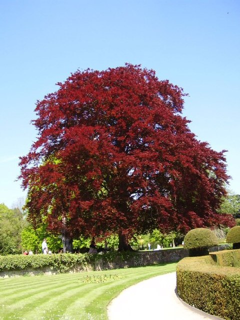 A red tree....that's it!